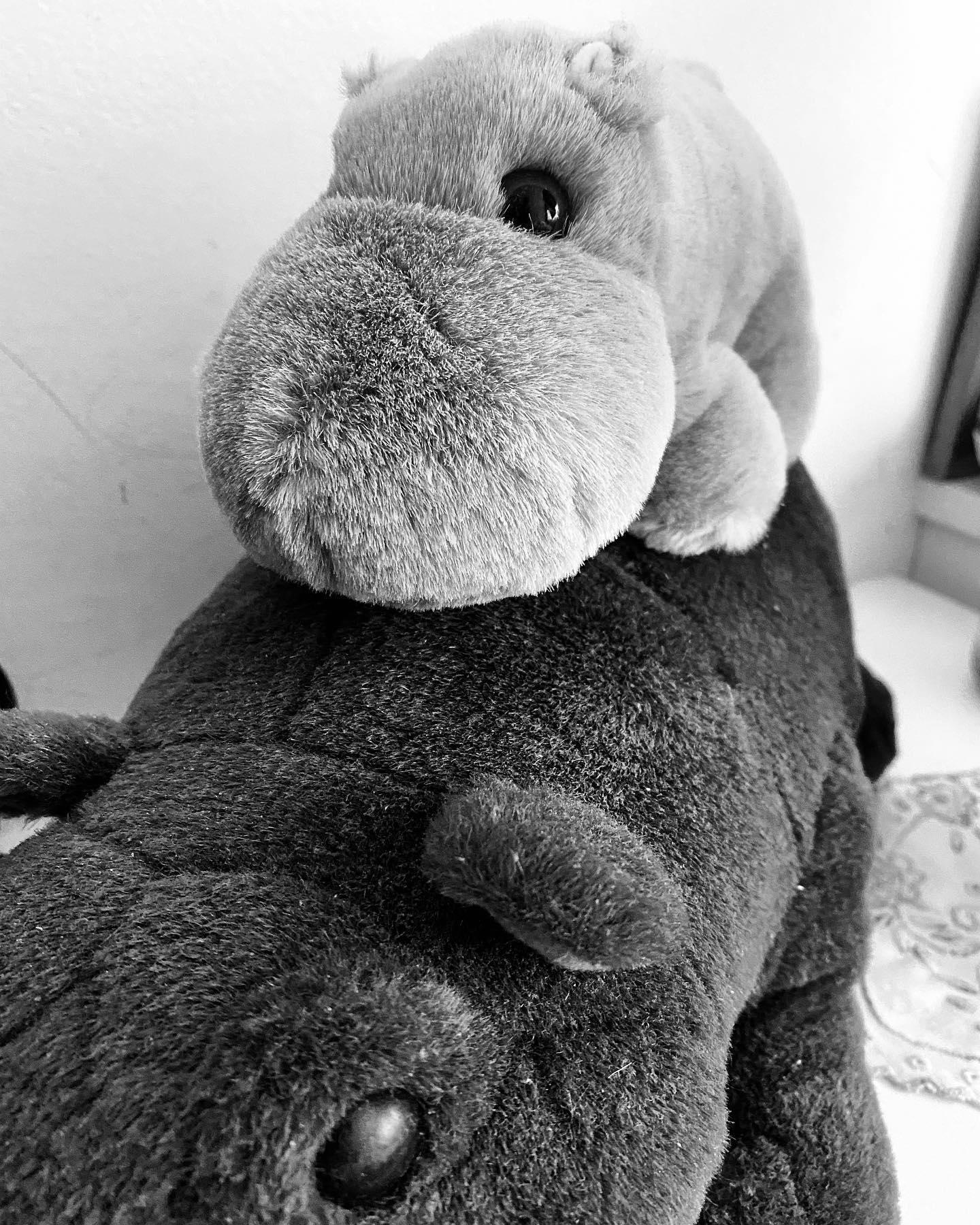 Kleines Plüsch Flusspferd sitzt auf einem größeren