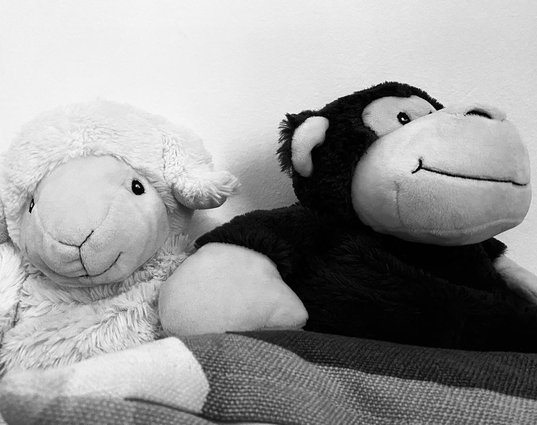 Stoffschaf und Stoffschimpanse nahe nebeneinander sitzend